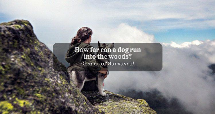 how far can a dog run